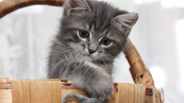 Считается, что в холодное время года рождаются малыши с жестким характером. Чтобы смягчить нрав котам, родившимся зимой, им принято давать нежные имена