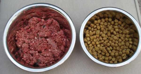 Отдать предпочтение одному из типов корма можно только путем ряда проб и ошибок