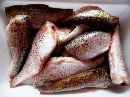 Речная рыба опасна для всех собак