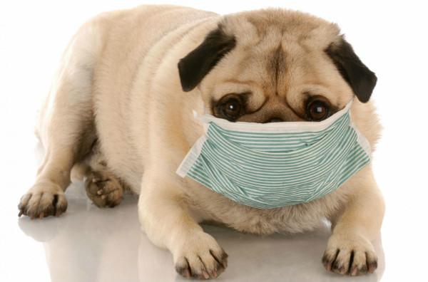 Аденовирус передается воздушно-капельным путем