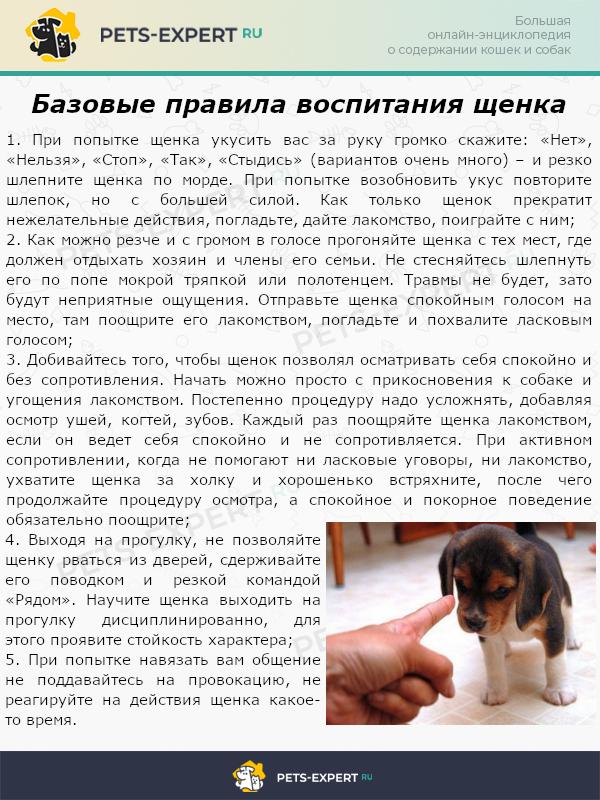 Базовые правила воспитания щенков