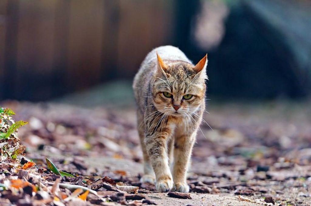 Бесконтрольный доступ кота к улице может закончится его заражением