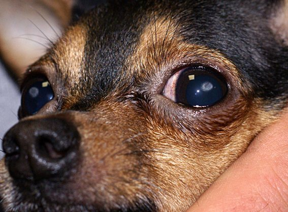 Болезни глаз в большинстве случаев легко поддаются лечению при своевременном обращении к врачу