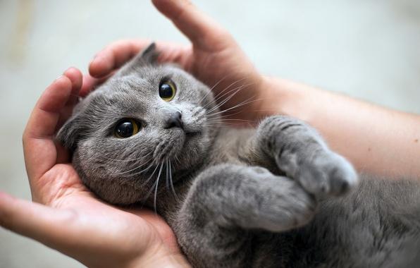 Внимательное отношение к кошке с эпилепсией позволит ей прожить долгую и счастливую жизнь