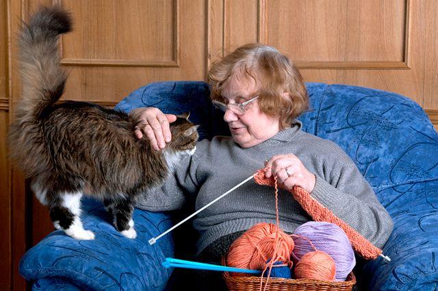 Вопрос о том, как соотнести кошачий возраст с человеческим волнует многих кошатников