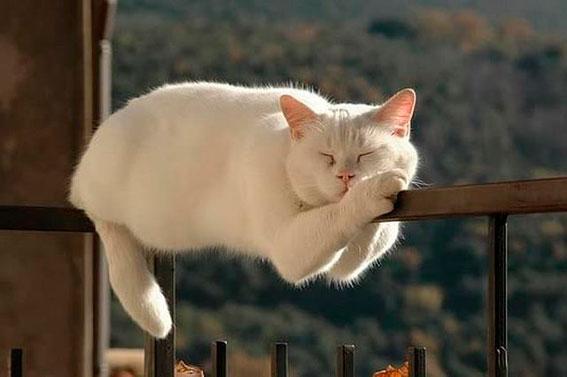 Во время Ауры кошка может быть как перевозбужденной, так и сонливой