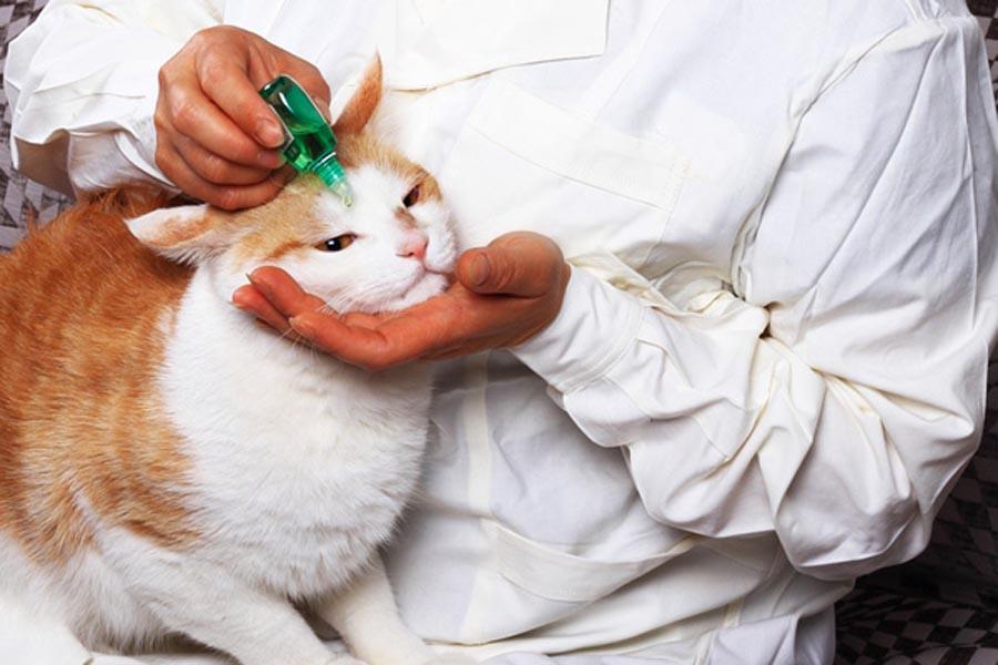 Во время закапывания глаз кот может проявлять агрессию и вырываться