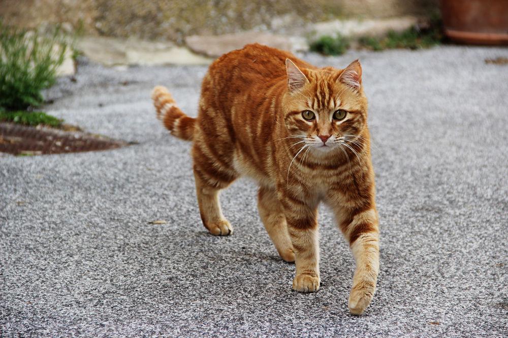 Во многих случаях определение возраста зрелого кота является сложной задачей для неопытного кошатника