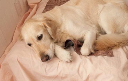 Выделения после вязки у собак