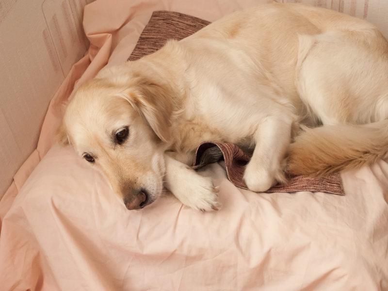 Выделения из петли у беременной собаки основные причины и последствия