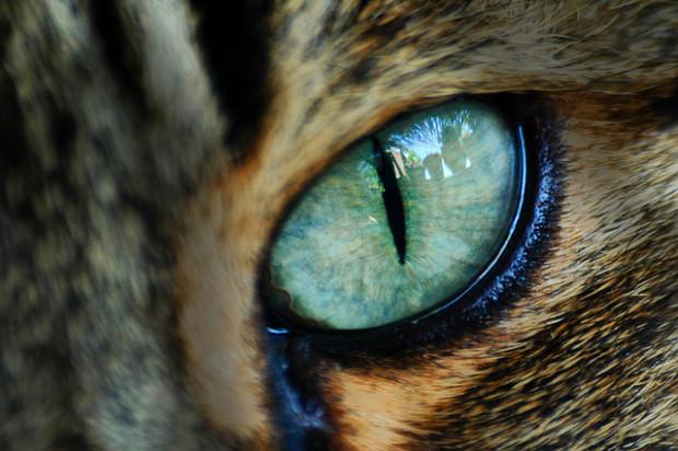 В норме глаза кошки не должны иметь никаких замутнений или белесых пятен