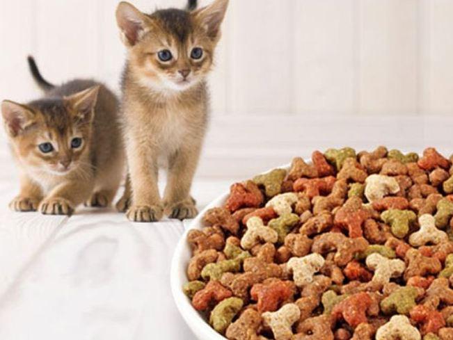 Для того, чтобы котенку было легче приспособится к сухому корму, первое время его нужно размягчать