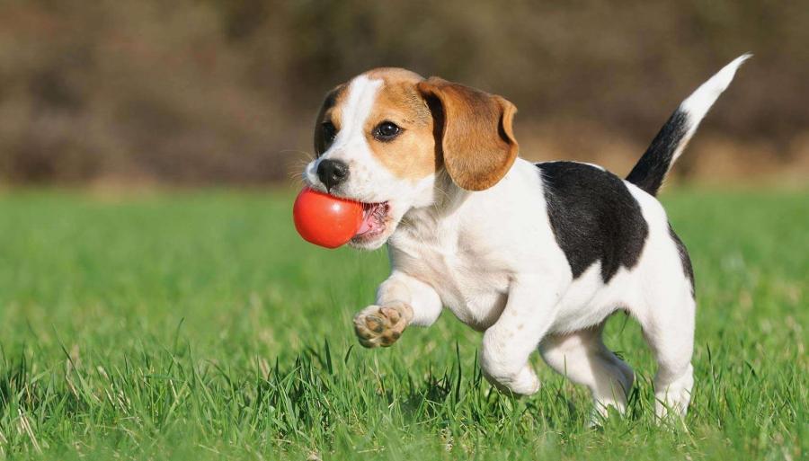 Дрессировки позволяют щенку развиваться не только физически, но и умственно