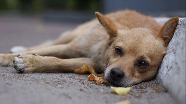 Ежегодно собаки умирают вследствие попадания в их организм умышленно разбрасанного на улице яда