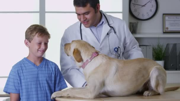 Если у собаки проявляются признаки бурсита, следует как можно быстрее показать ее ветеринару