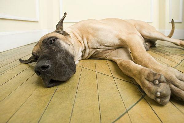 Заболевшее животное ни в коем случае не должно спать или отдыхать на голом полу