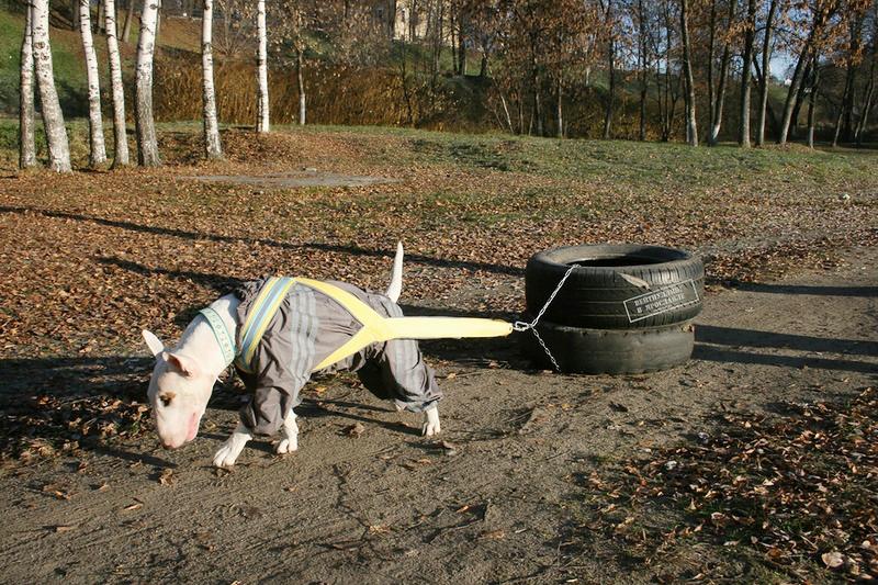 Запрещены переболевшим бурситом собакам и любые упражнения из области тяжелой атлетики