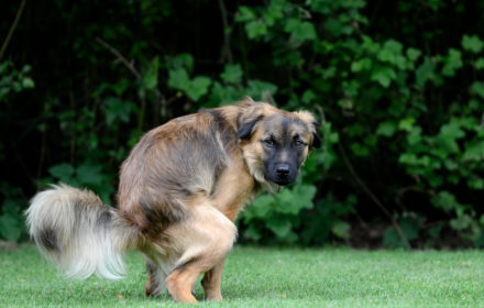 Зеленый кал у собаки