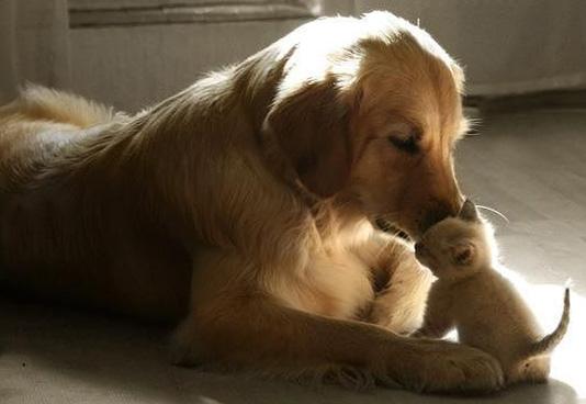 Знакомство котенка с прочими животными в доме должно проходить в присутствии хозяина