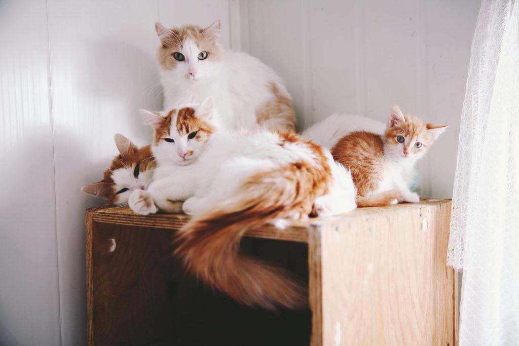 Из-за перенаселенности приютов животные в них подвержены всевозможным эпидемиям