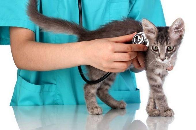 Иногда у котят могут обнаруживаться осложнения после прививок