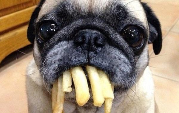 Картофель противопоказан собакам в любом виде