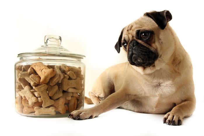 """Корма эконом-класса постепенно """"изнашивают"""" пищеварительную систему собаки"""