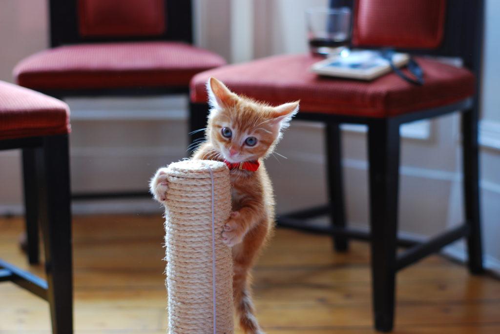 Котятам хорошо подходят невысокие когтеточки, с которых нельзя упасть