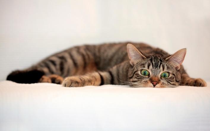 Кошки могут оправляться после приступа, не привлекая к себе внимания