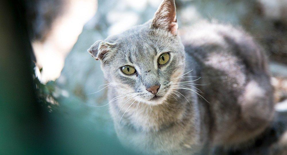 Найти общий язык с незнакомой взрослой кошкой - непростая, но выполнимая задача