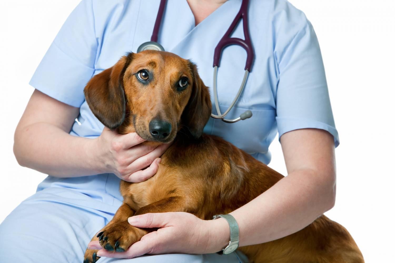 Наличие у собаки выделений неестественной консистенции требует ее осмотра в ветеринарной клинике
