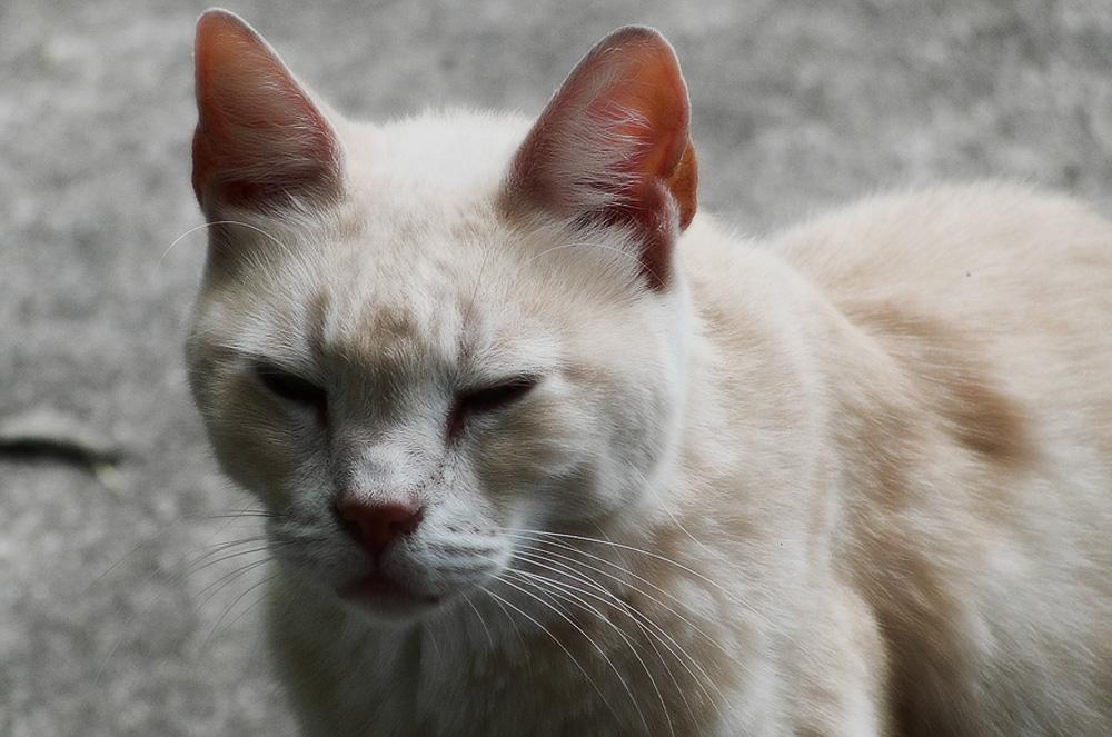 На инфекционное заболевание животного помимо проблем с глазами будут указывать повышение температуры и отсутствие аппетита