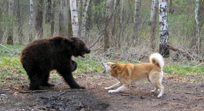 Не забывайте о том, что некоторые виды охоты представляют прямую опасность для животного