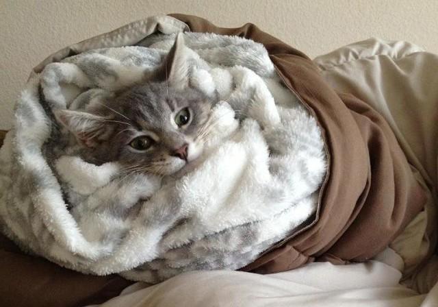 Одним из эффективных способов успокоения кота является заворачивание питомца в плотное одеяло