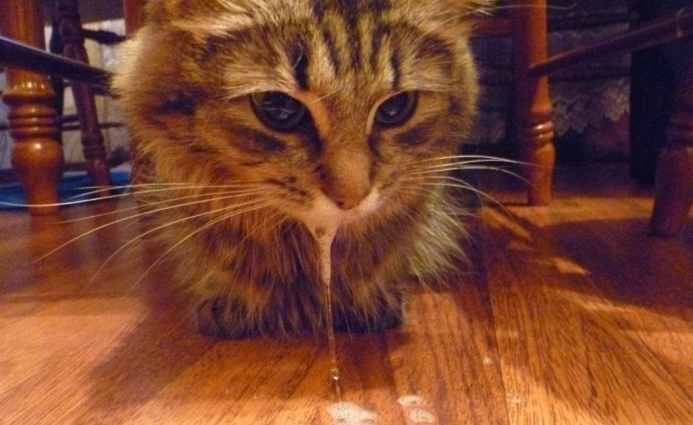Перед началом приступа важно аккуратно уложить кошку на бок