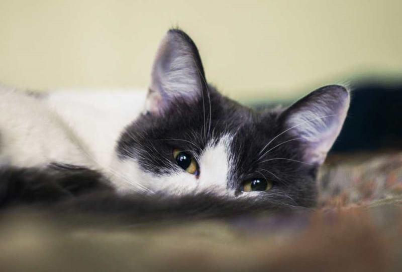 Понижение температуры сочетающееся с отсутствием сил у кота является тревожным признаком