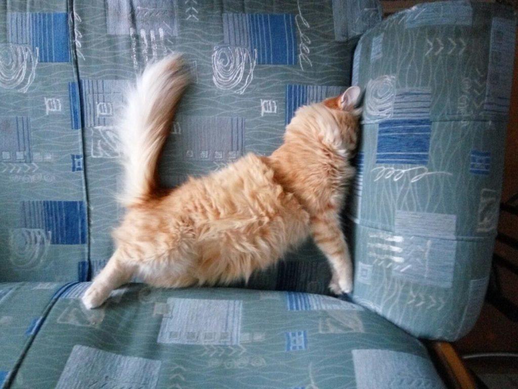 После эпилептического приступа кот может казаться неуклюжим