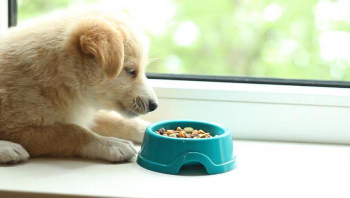 По мере взросления щенков, в их рацион постепенно вводятся новые продукты