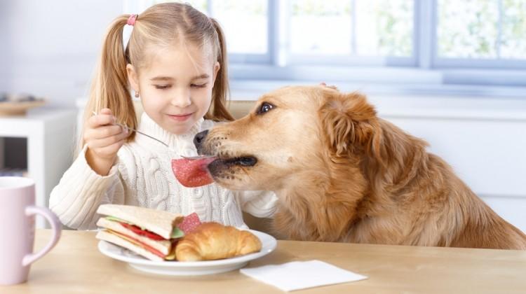 Правильное кормление собаки позволит во многом уберечь ее от вздутия живота