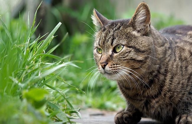 Привести к изъязвлению может даже контакт с обыкновенной зеленой травой
