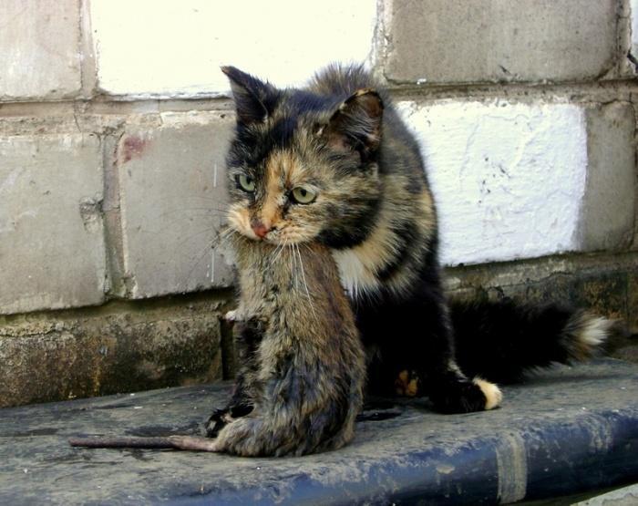 Приручение бездомной кошки требует от человека самодисциплины и определенных навыков