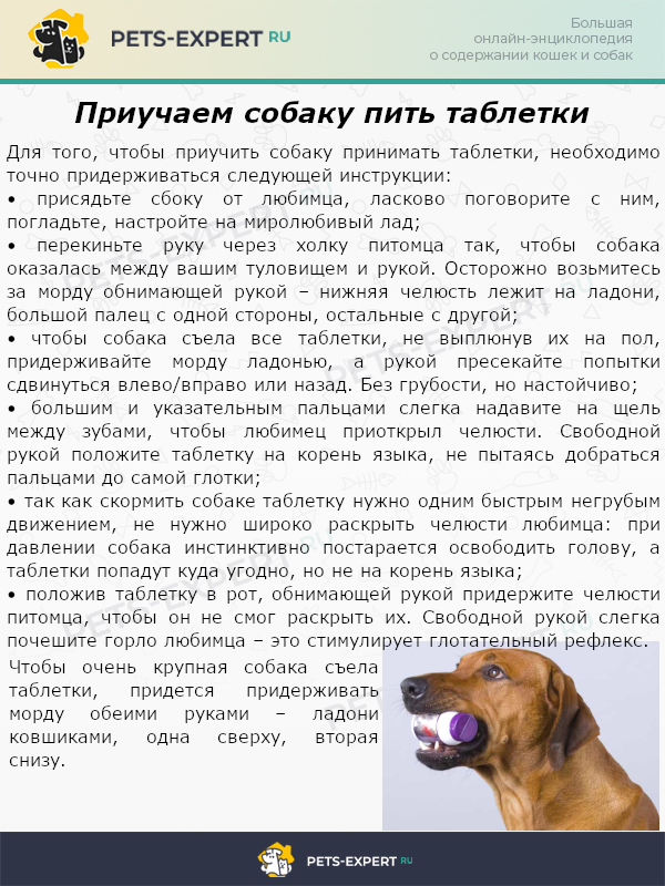 Приучаем собаку пить таблетки