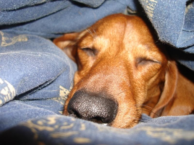 При своевременном лечении собаки, Ротавирусная инфекция проходит без ущерба для ее здоровья