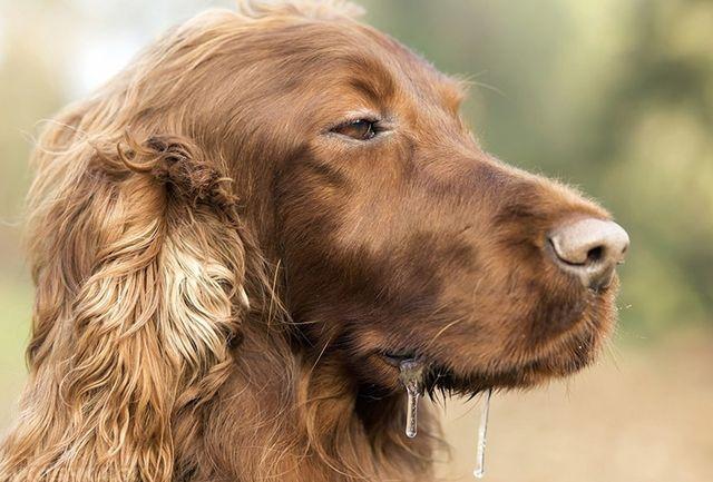 Слюна у собак обладает высокими показателями кислотности