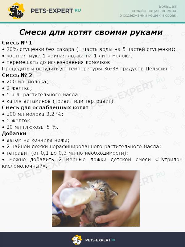 Смеси для котят своими руками