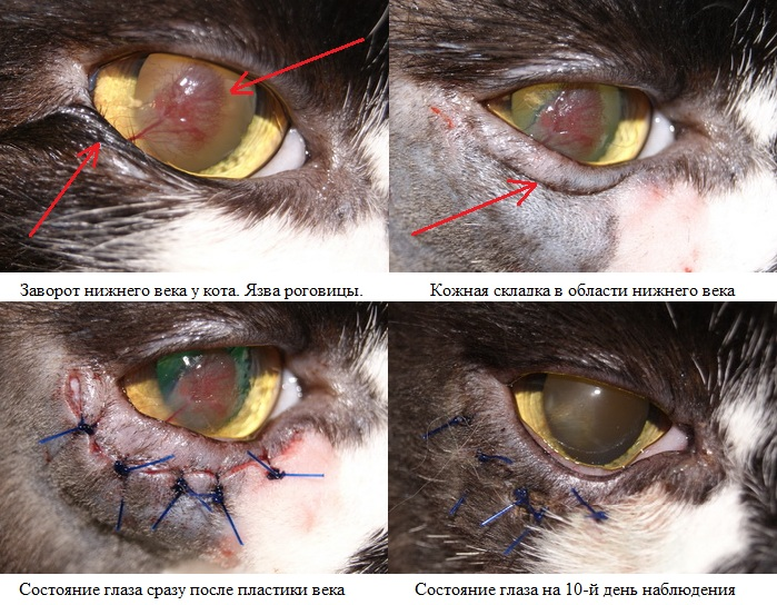 Состояние века животного до и после операции