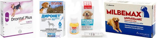 Средства для борьбы с глистами у собак