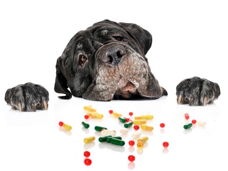 В рацион собаки так же можно добавить витамины, но только после консультации с врачом