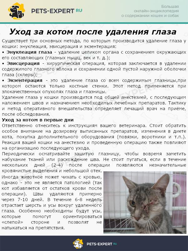 Уход за котом после удаления глаза