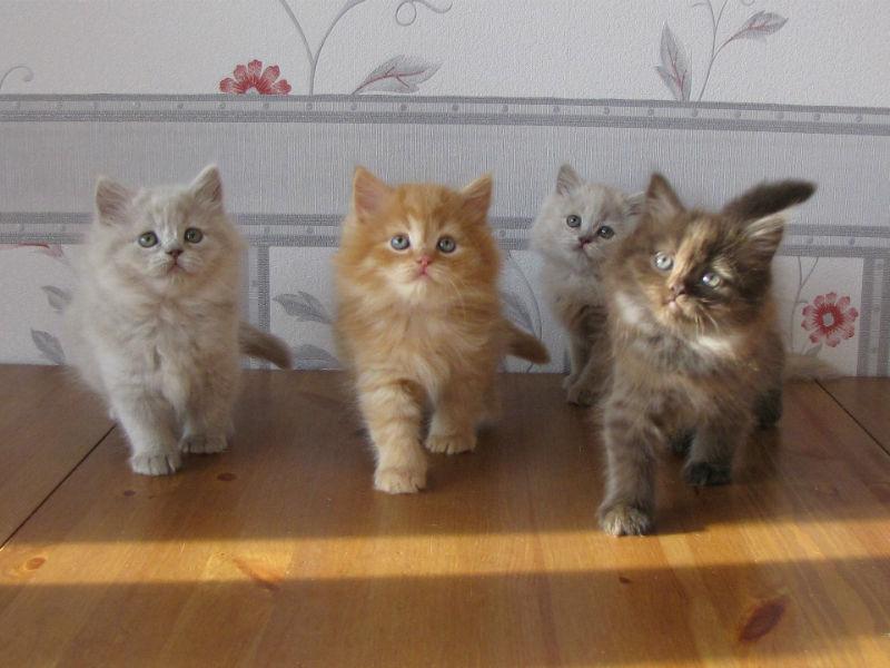 У всех здоровых котят шерсть находится в прекрасном состоянии
